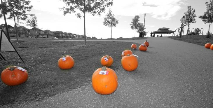 Annual Woodland Hills Pumpkin Giveaway by Nikolay and Tatiana Team-Newmarket Realtors